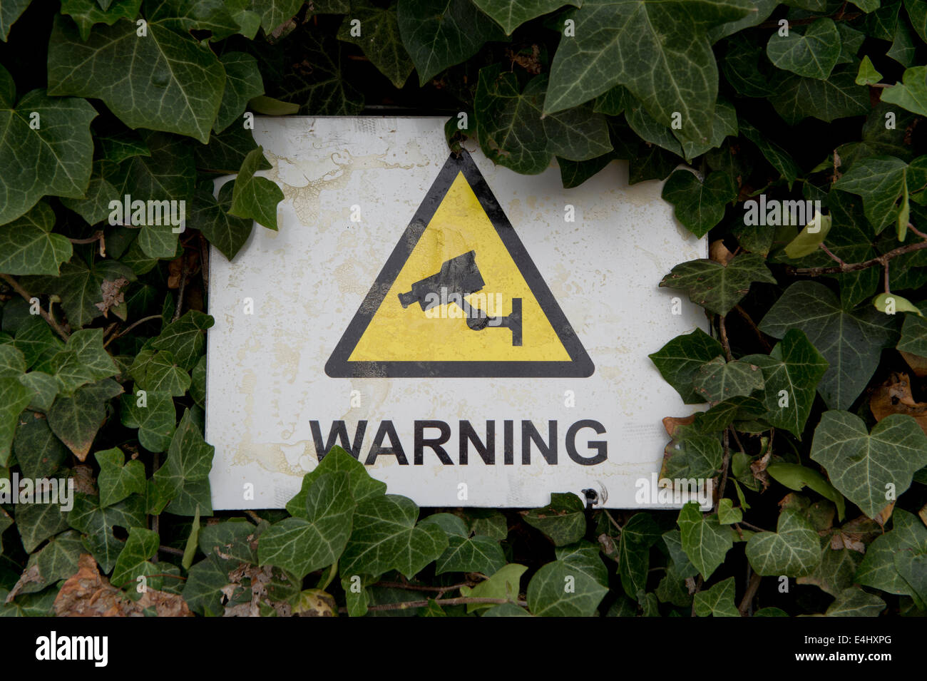 A warning sign indicating that CCTV is in operation in partially hidden behind some leaves in Manchester, UK. - Stock Image
