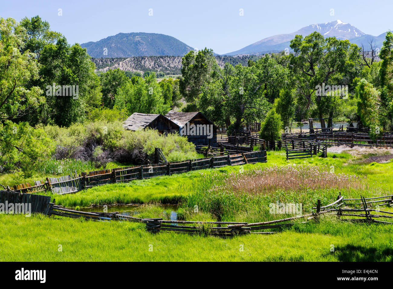 Lush pasture along the Arkansas River, Rocky Mountains beyond, Central Colorado, USA - Stock Image
