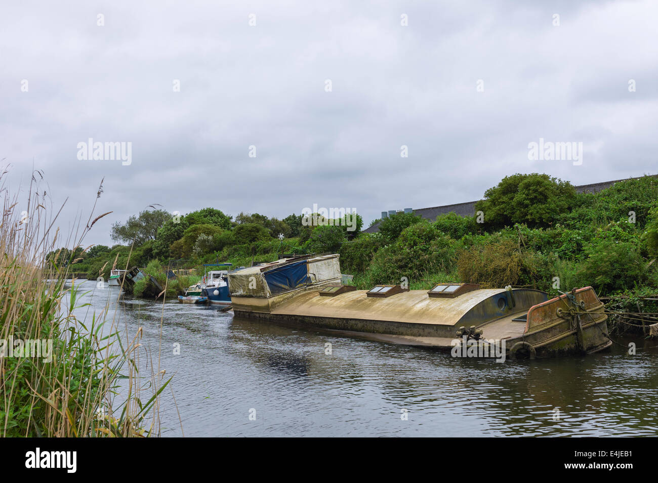 Derelict river boat lays beached along the river Hull surrounded by reeds and overgrown vegetation near Beverley, - Stock Image