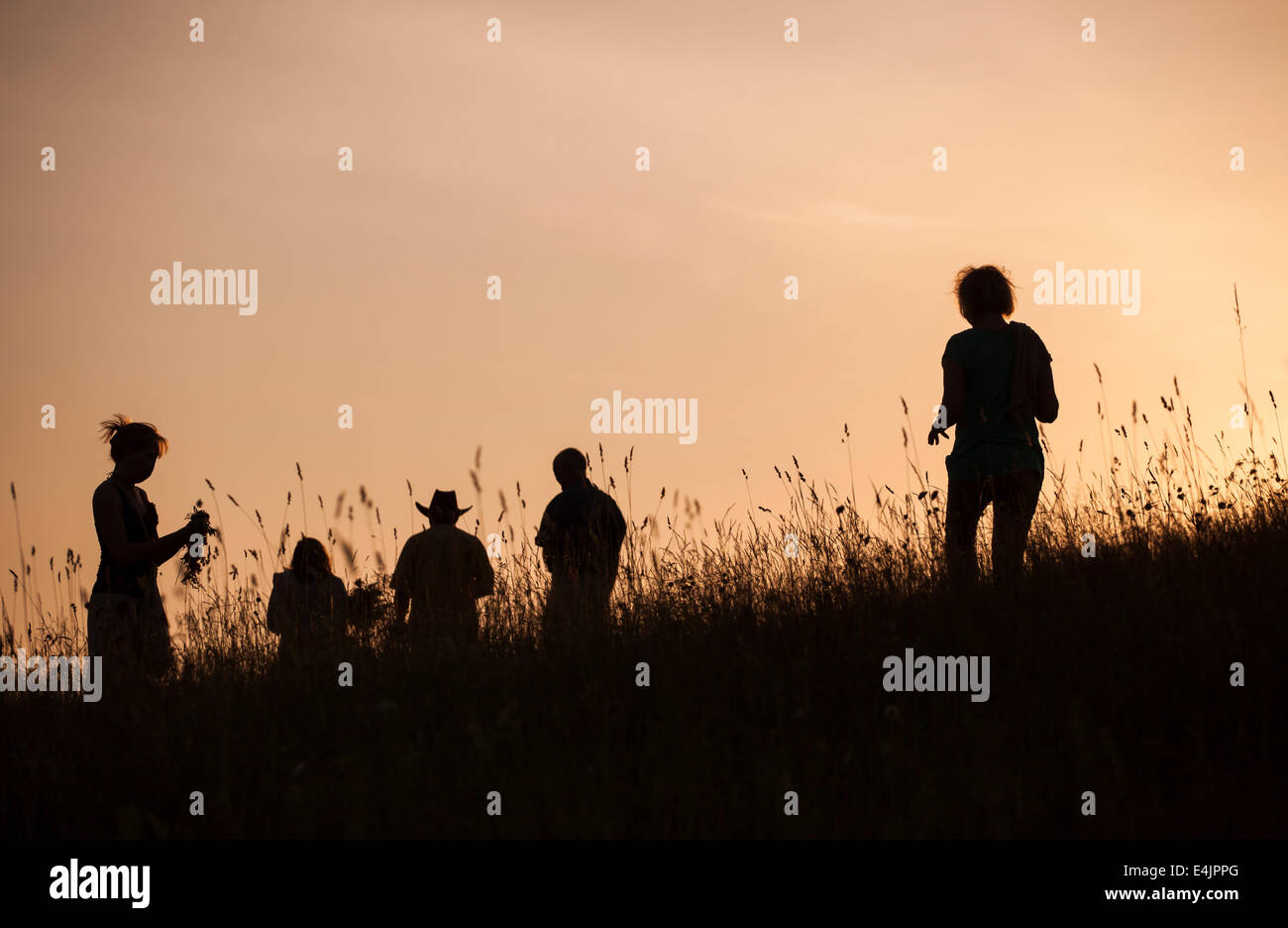 Silhouettes of People picking flowers during midsummer soltice celebraton against the background of sunset Stock Photo