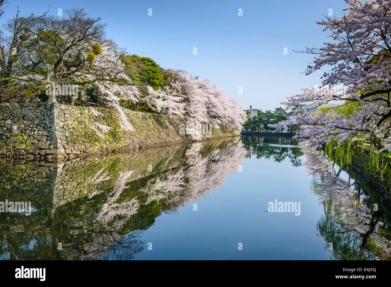 Castle outer moat during the spring season in Hikone, Japan. - Stock Image