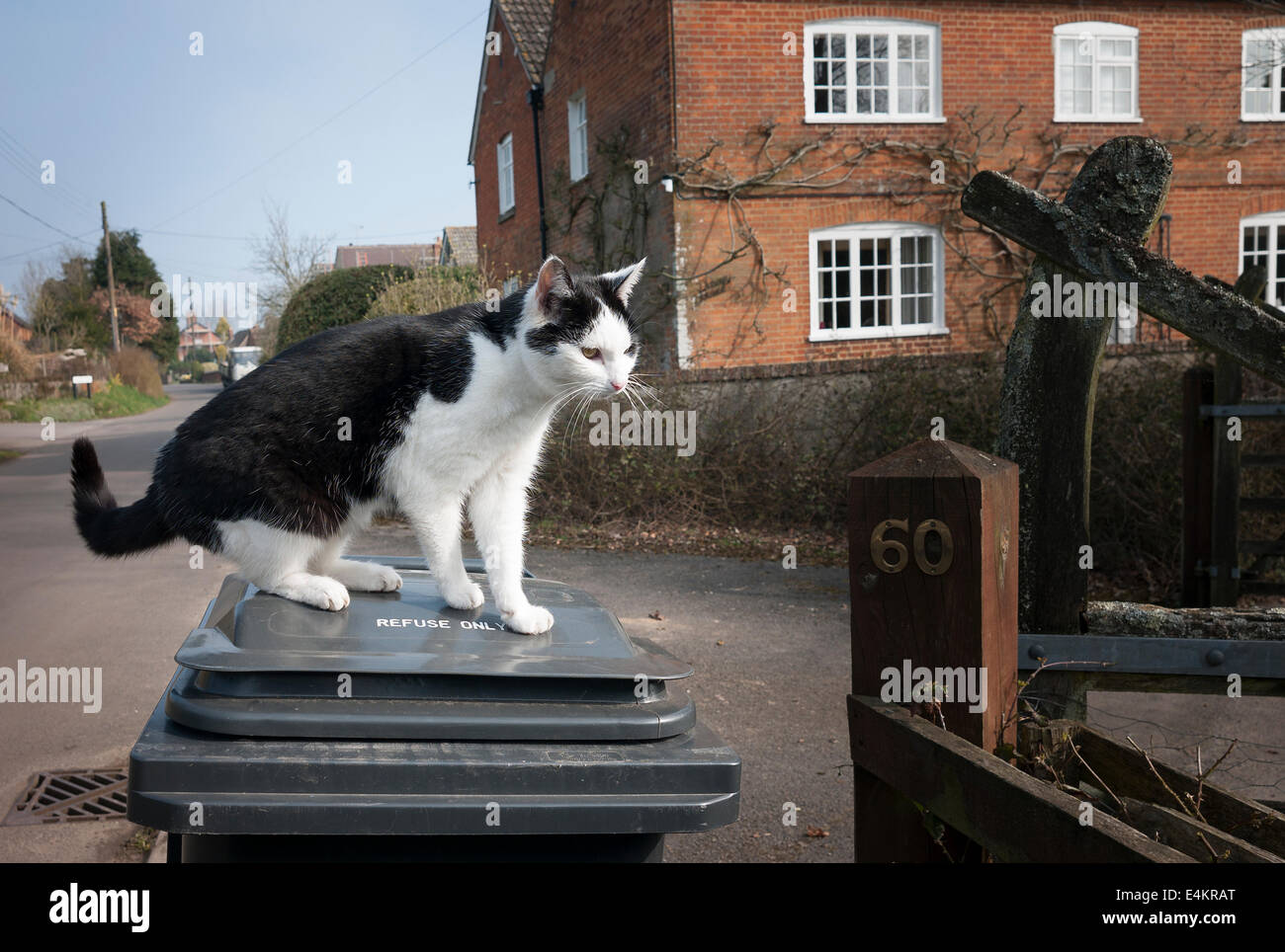 A country cat on a refuse bin in active hunting mode - Stock Image