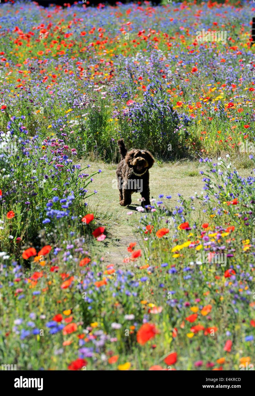Dog Walking In Symmonds Yat