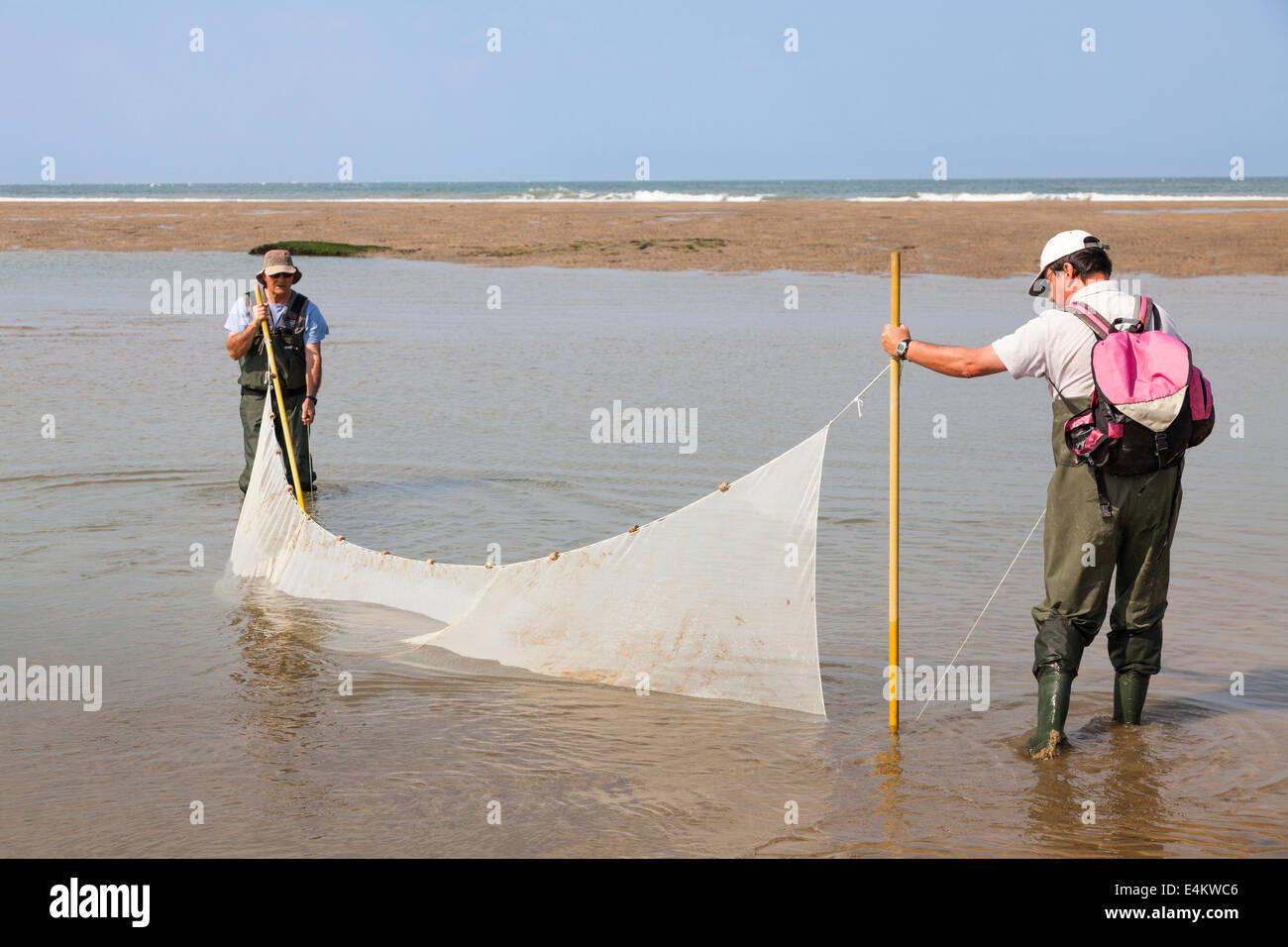 Two fishermen trawling for fish on the beach with a net in a in a pool left by the receding tide. - Stock Image