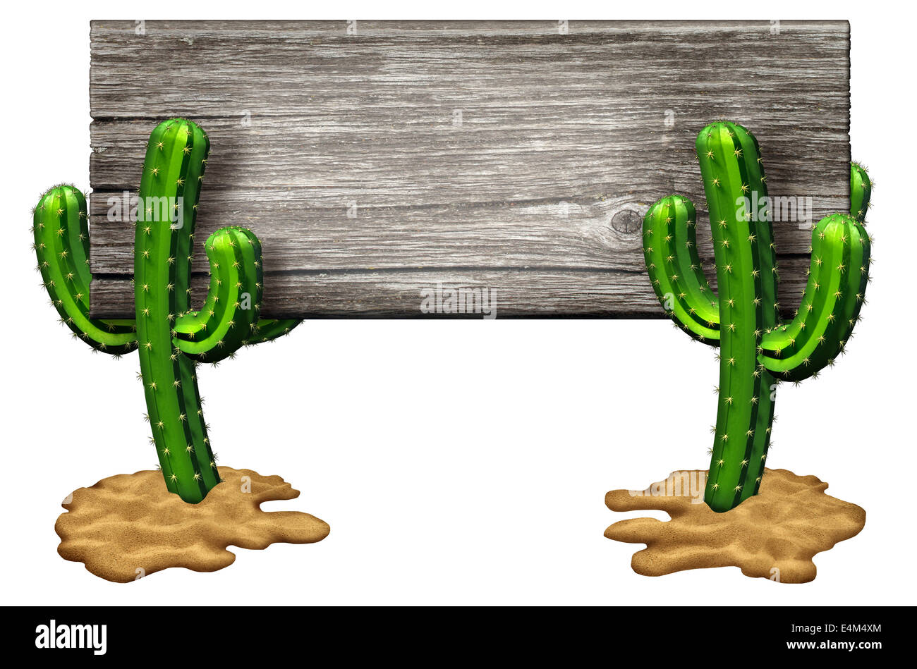 Cactus sign as two Cacti plants on a desert sand floor holding up an old rustic wood banner isolated on white as - Stock Image