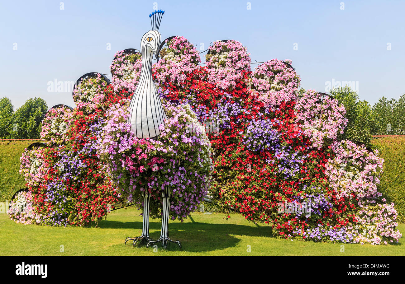 Peacock Topiary Covered In Flowers At Dubai S Miracle Garden Largest Stock Photo Alamy