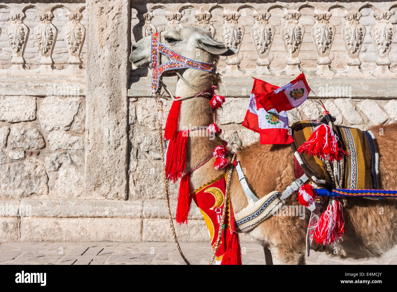 Llama with peruvian flags in the peruvian Andes at Arequipa Peru - Stock Image