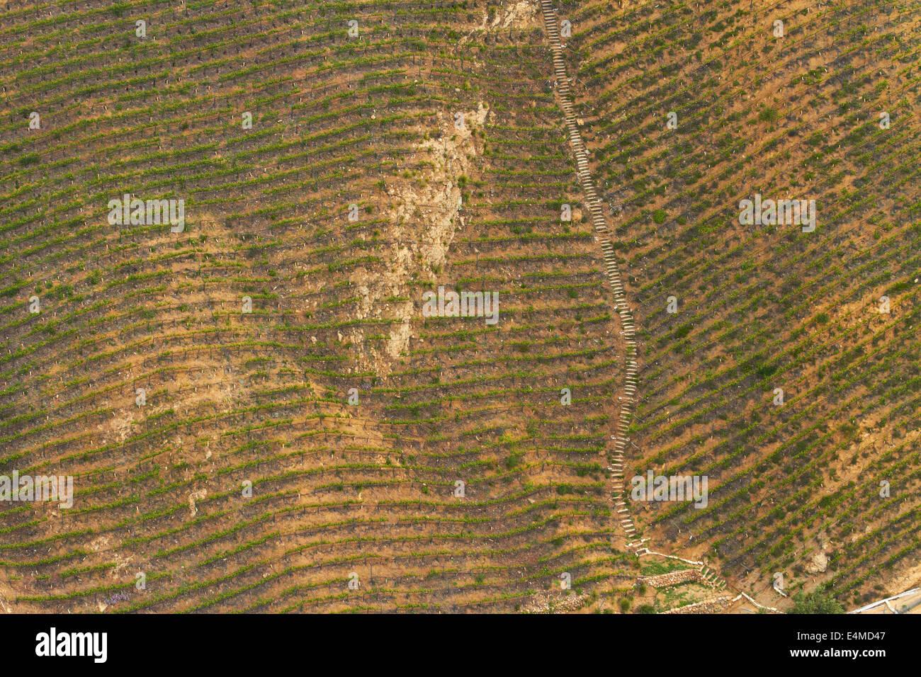 Hollywood Classic Vineyard, Hollywood Hills, Hollywood, Los Angeles, California, USA - aerial - Stock Image