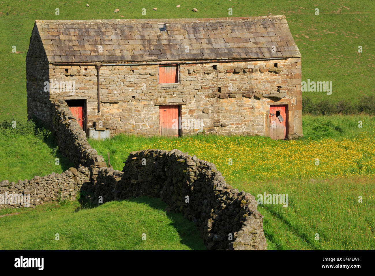 Stone barn with red doors, Swaledale, Yorkshire Dales - Stock Image