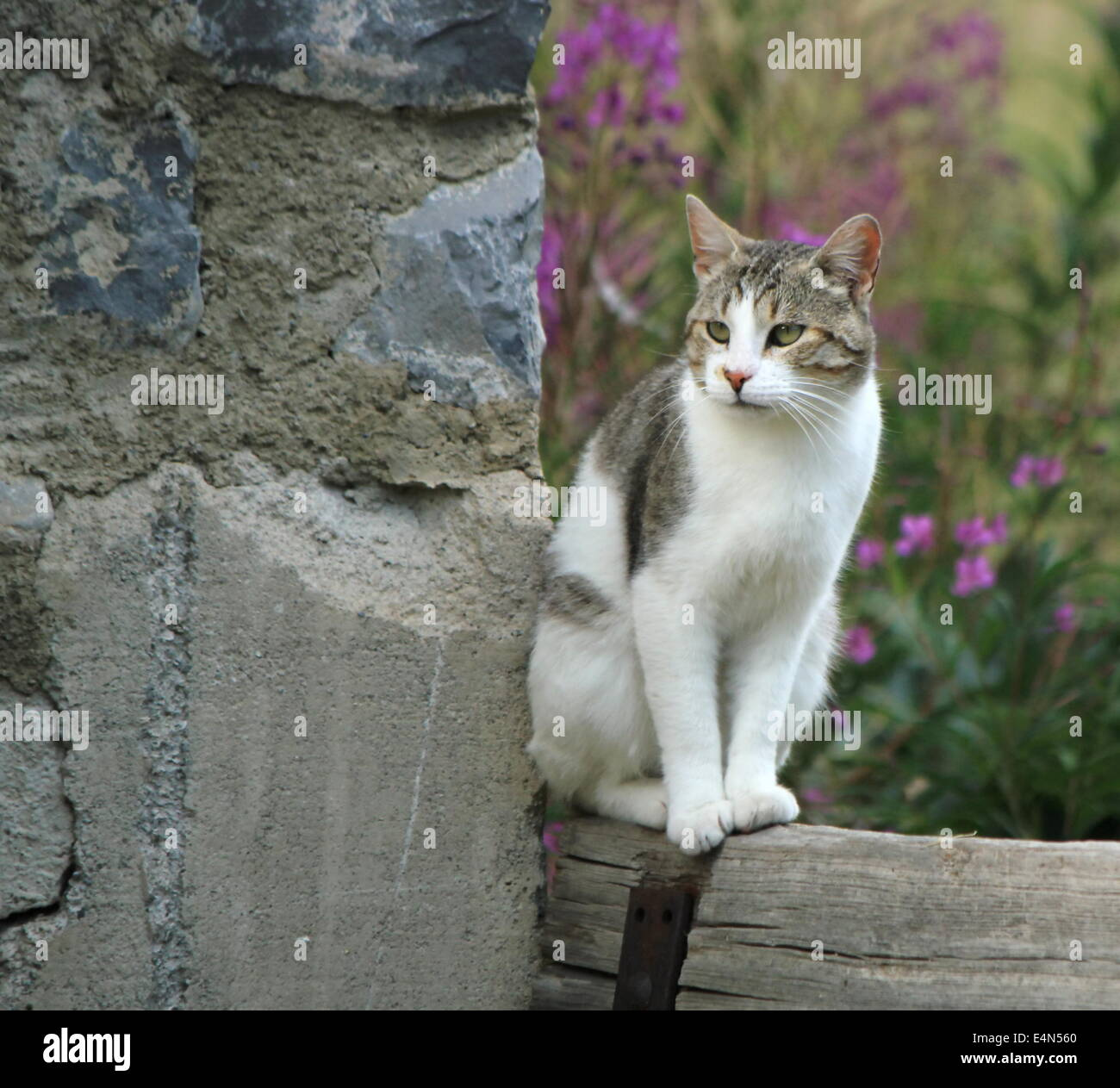 Quiet cat Stock Photo: 71765176 - Alamy