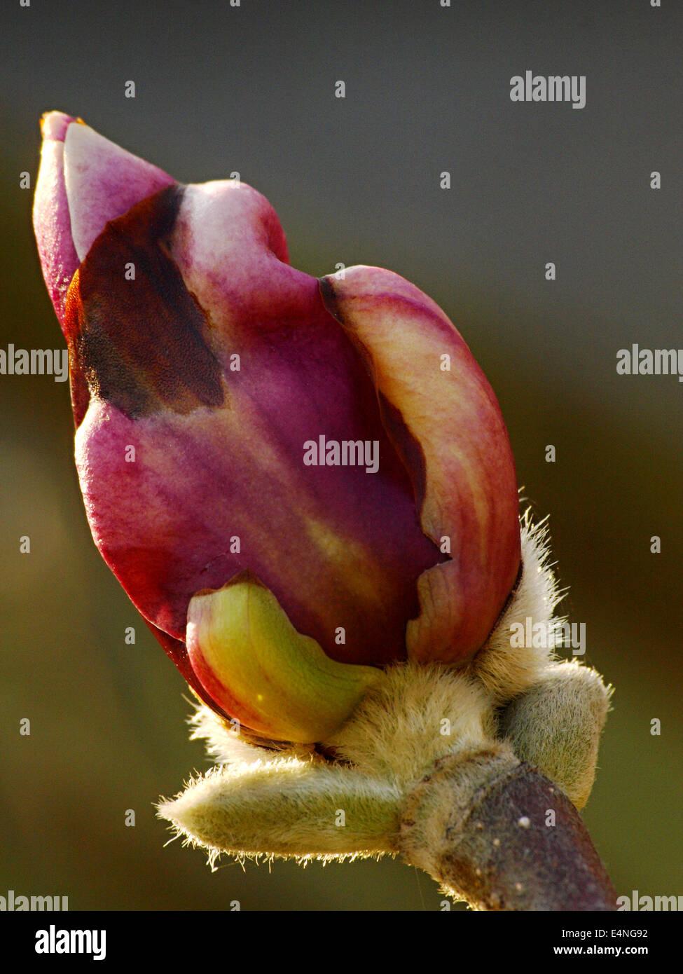 flower 1044078 - Stock Image