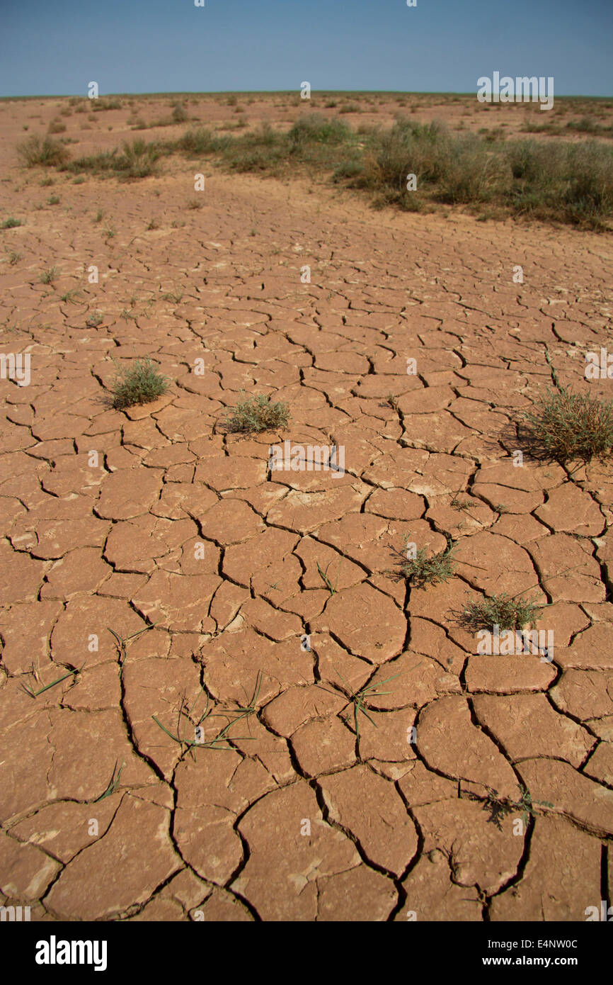 parched lakebed in the semi-desert with cracks and sparse vegetation - Stock Image