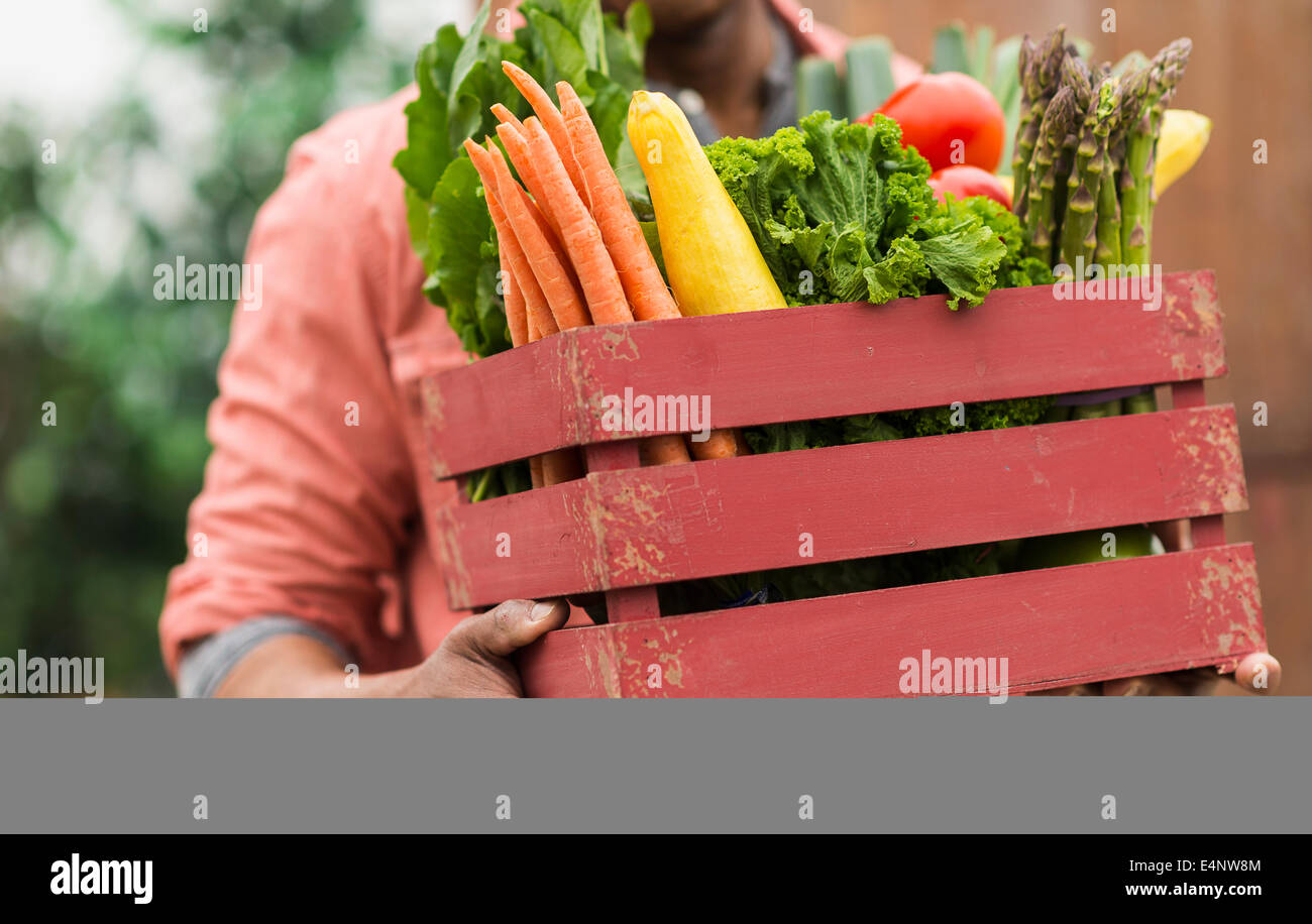 Close up of man carrying crate full of fresh vegetables Stock Photo