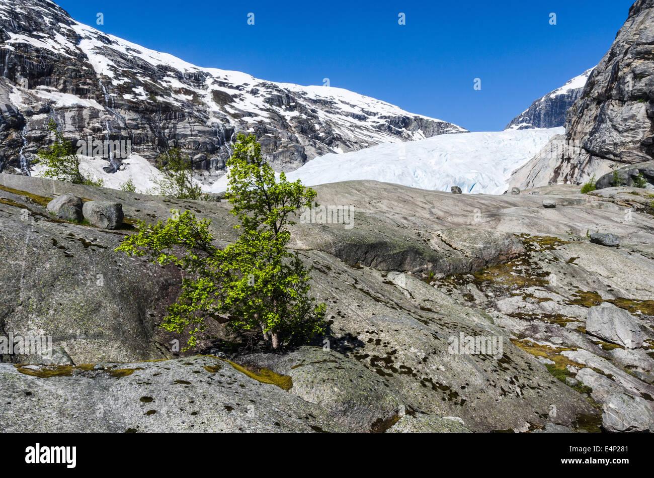 der Gletscher Nigaardsbreen, Jostedalsbreen Nationalpark, Breheimen, Luster, Sogn og Fjordane Fylke, Norwegen, - Stock Image