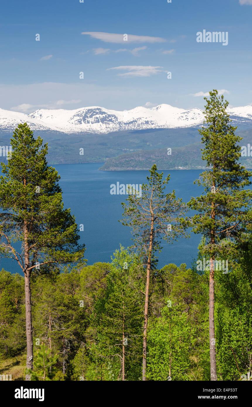 Innvikfjorden, Stryn, Sogn og Fjordane Fylke, Norwegen - Stock Image