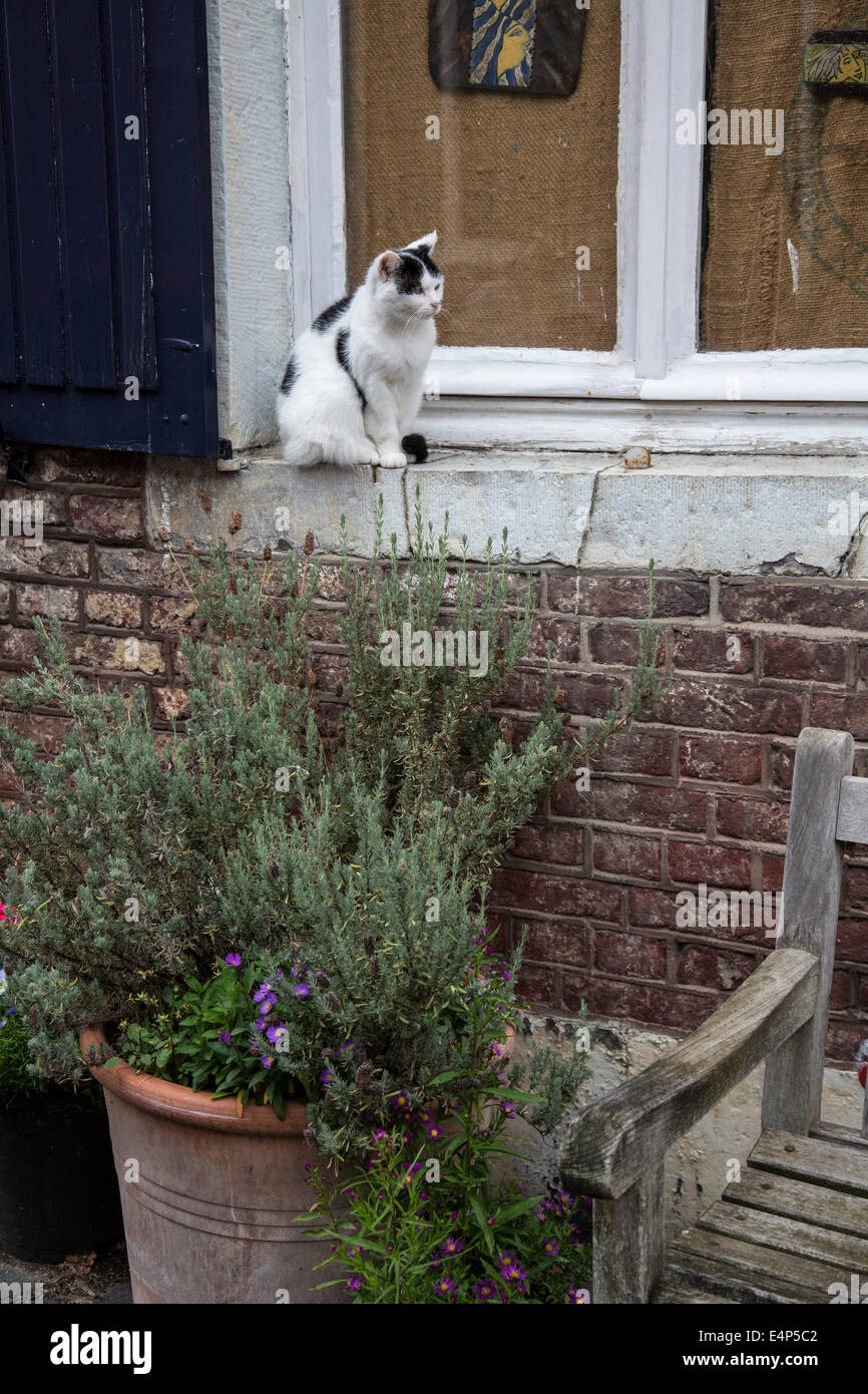 Cat on a windowsill - Stock Image
