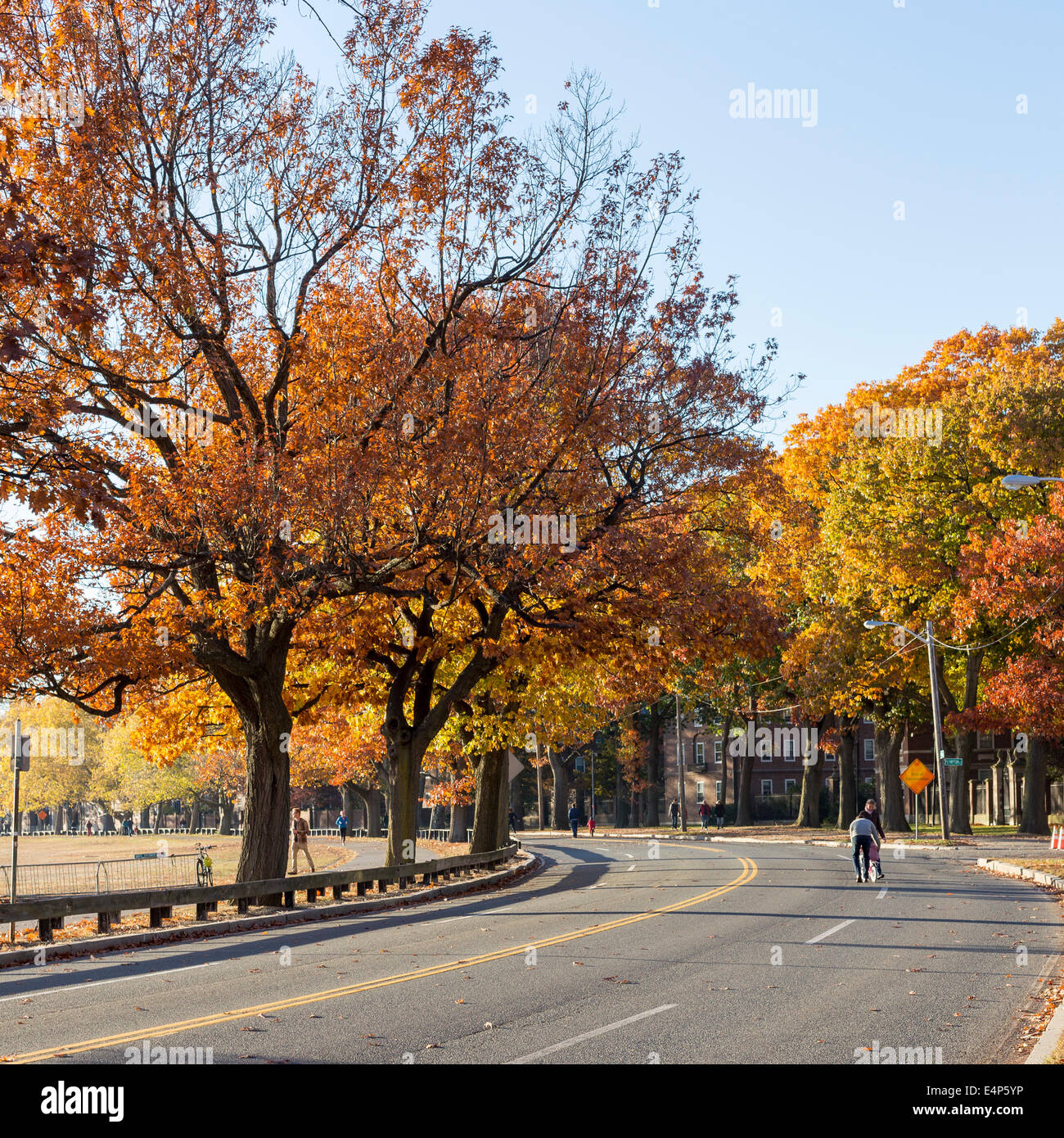 Colorful fall leaves on a sunny day near Harvard University campus in Cambridge, MA, USA in November 2013. Stock Photo
