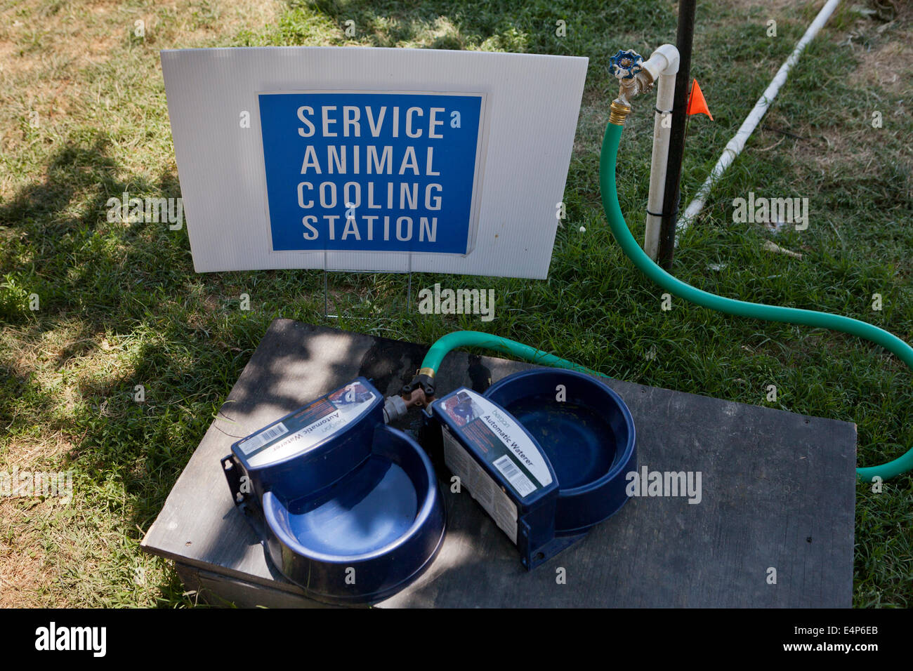 Service animal cooling station at an outdoor event - USA - Stock Image