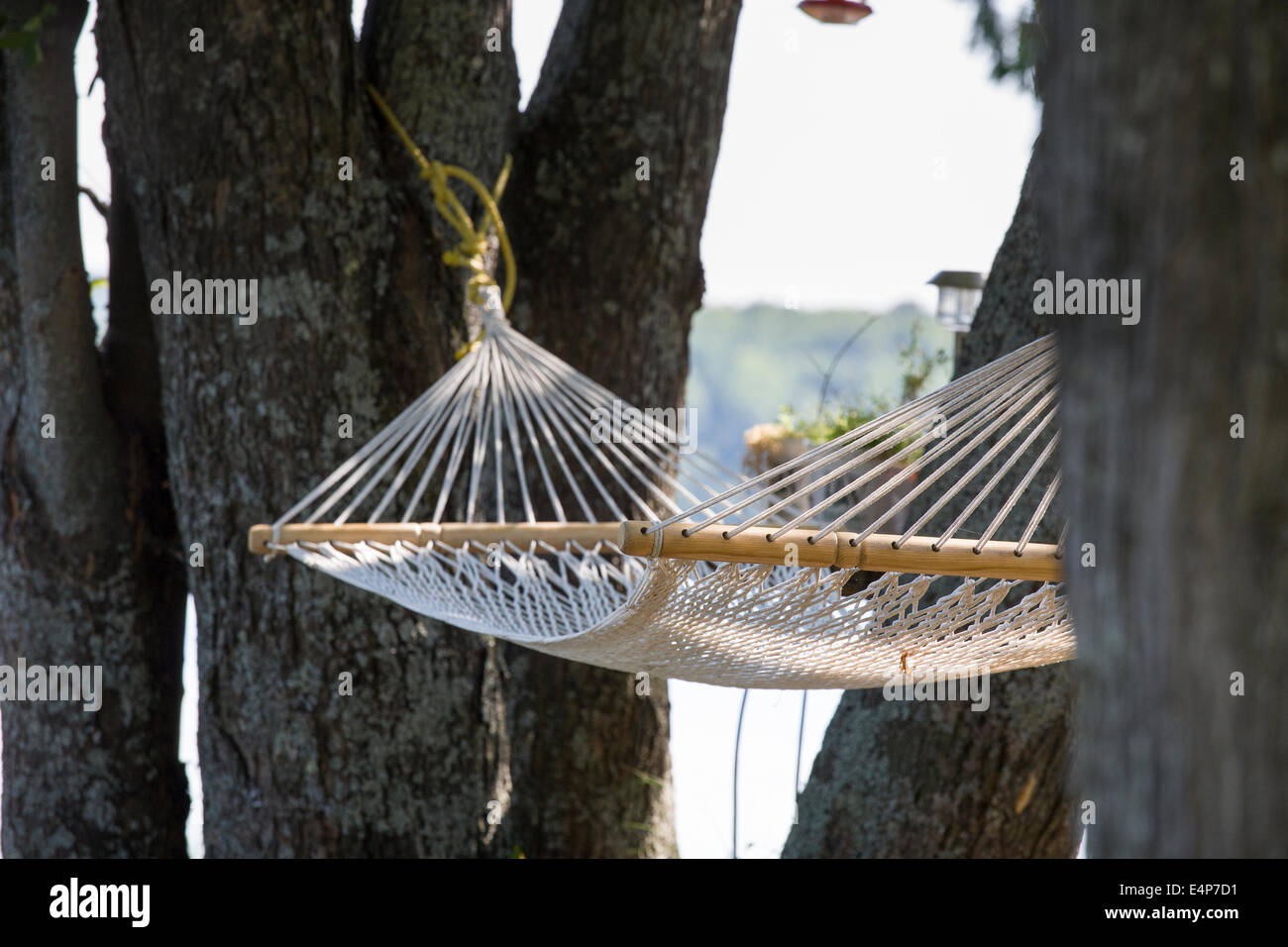 Empty Hammock in the Trees. An empty string hammock hangs between trees near a lake in cottage country north of - Stock Image