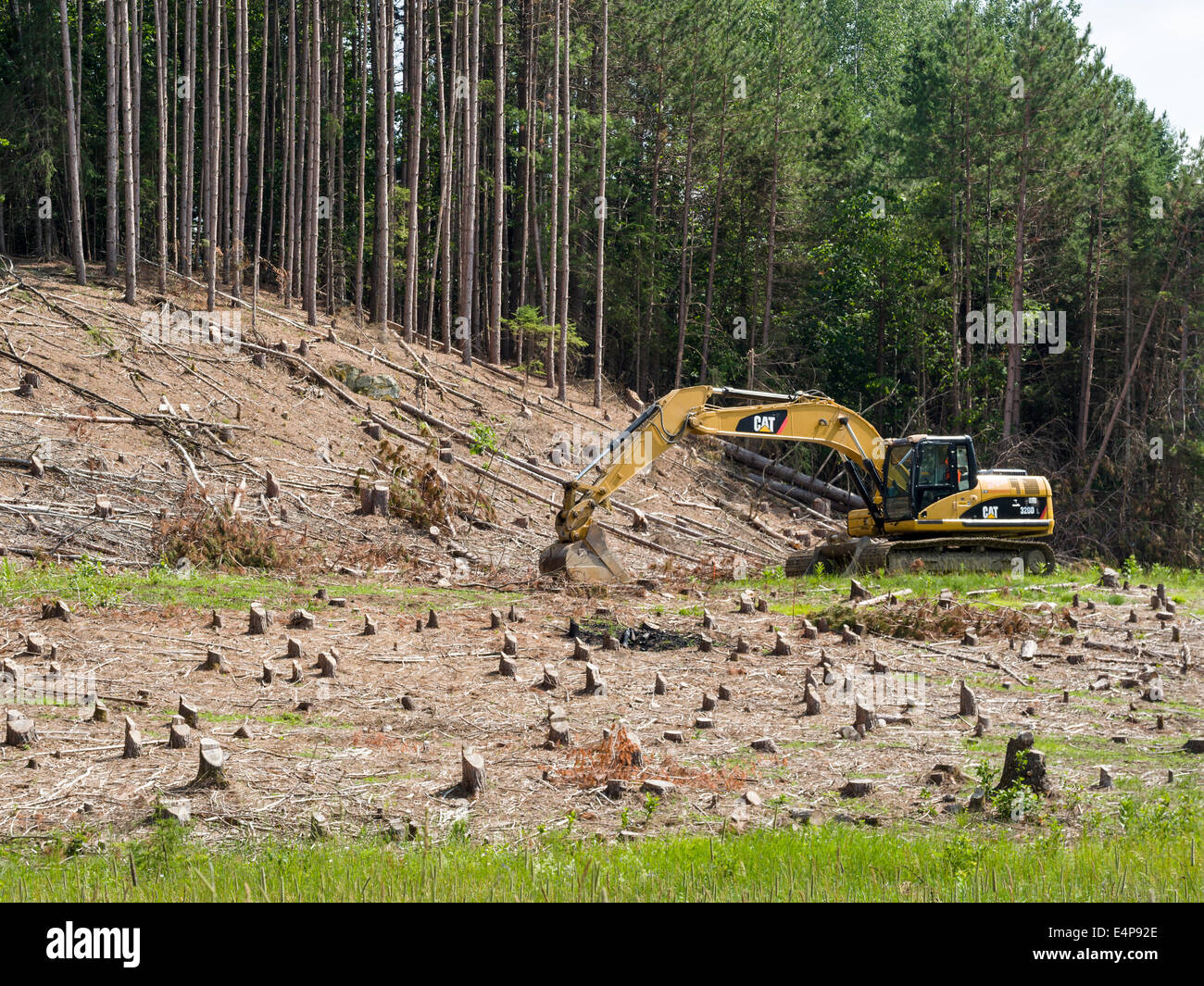Clearcut Trees with digger. After clearing a large swath of planted forest a earth digger is in place to start digging. Stock Photo