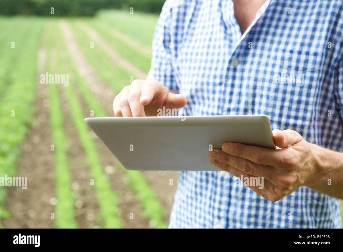 Close Up Of Farmer Using Digital Tablet On Organic Farm - Stock Image