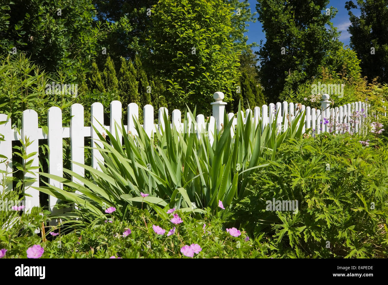 White wooden picket fence in front of a flower bed in a landscaped residential front yard garden, Quebec, Canada - Stock Image