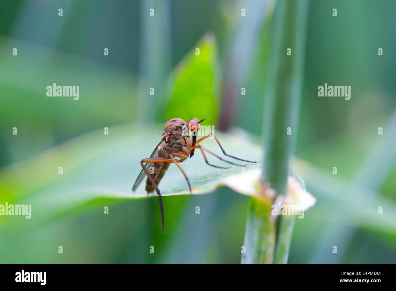 Fliege auf einem Blatt - Stock Image