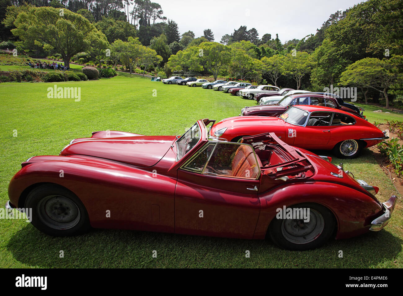Vintage Jaguars On Display Cape Town South Africa Stock Photo