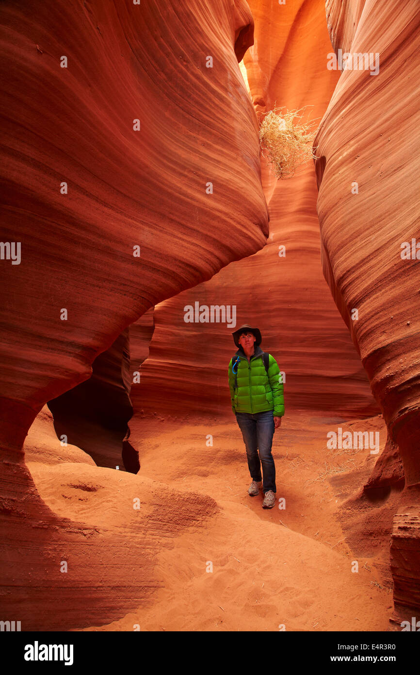 Tourist, eroded sandstone formations and tumbleweed caught high in Rattlesnake Canyon, near Page, Navajo Nation, Stock Photo