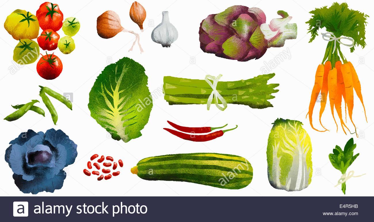 Assortment of fresh vegetables - Stock Image