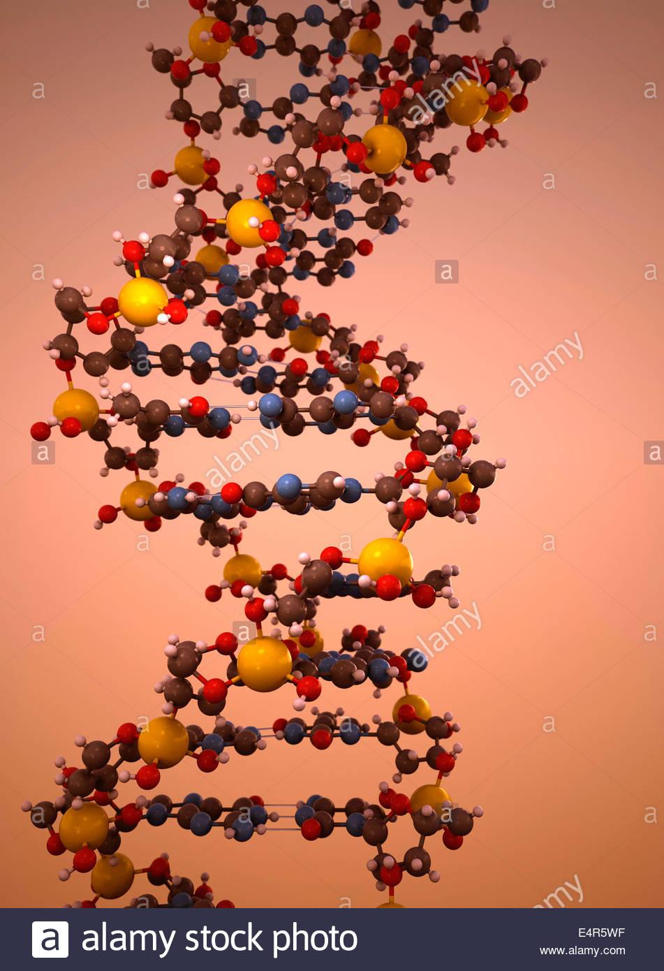 DNA double helix model - Stock Image