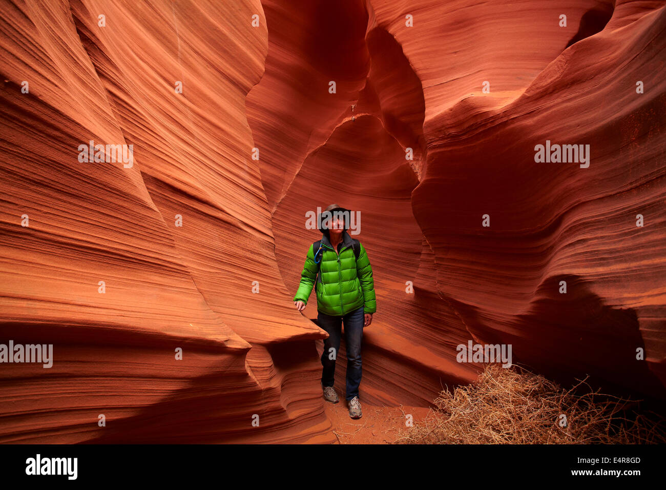 Tourist, tumbleweed, and eroded sandstone formations in Rattlesnake Canyon, near Page, Navajo Nation, Arizona, USA Stock Photo