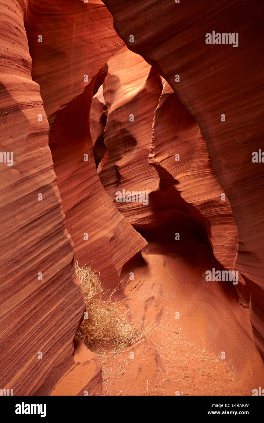 Eroded sandstone formations and tumbleweed in Rattlesnake Canyon, near Page, Navajo Nation, Arizona, USA Stock Photo