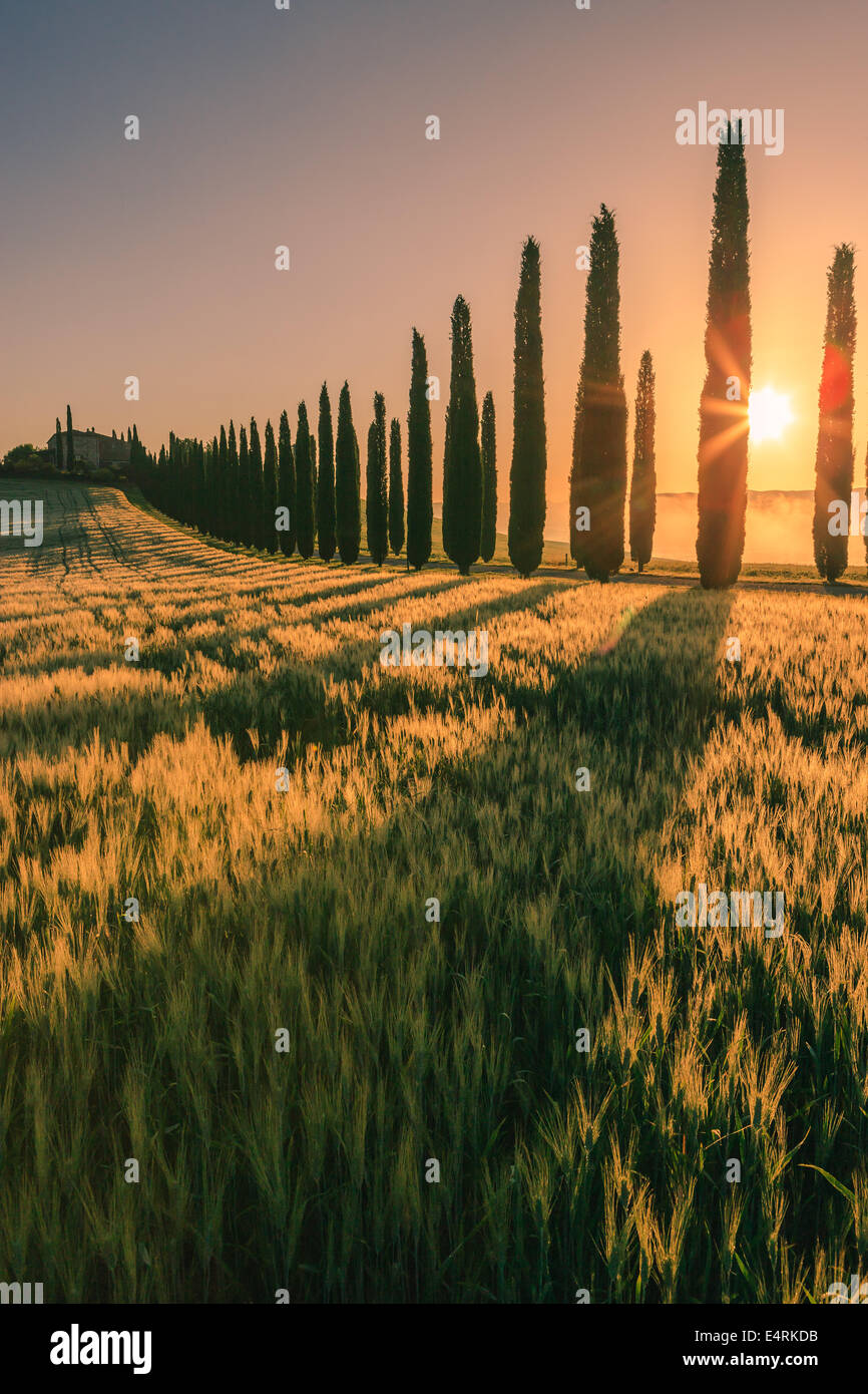 In the heart of Tuscany, in the countryside of the Val d'Orcia, stands Agriturismo Poggio Covili - Stock Image