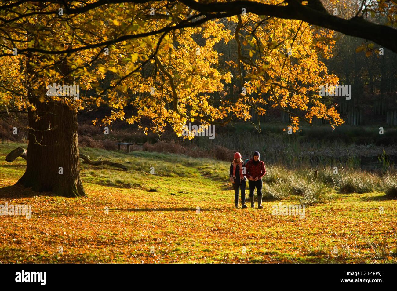 UK, Cheshire, Dunham Massey Park, autumn foliage and walkers in warm sunlight - Stock Image