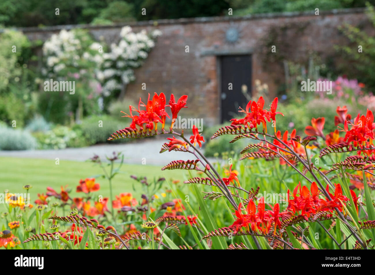 The walled garden at Holehird - home of the Lakeland Horticultural Society - Stock Image
