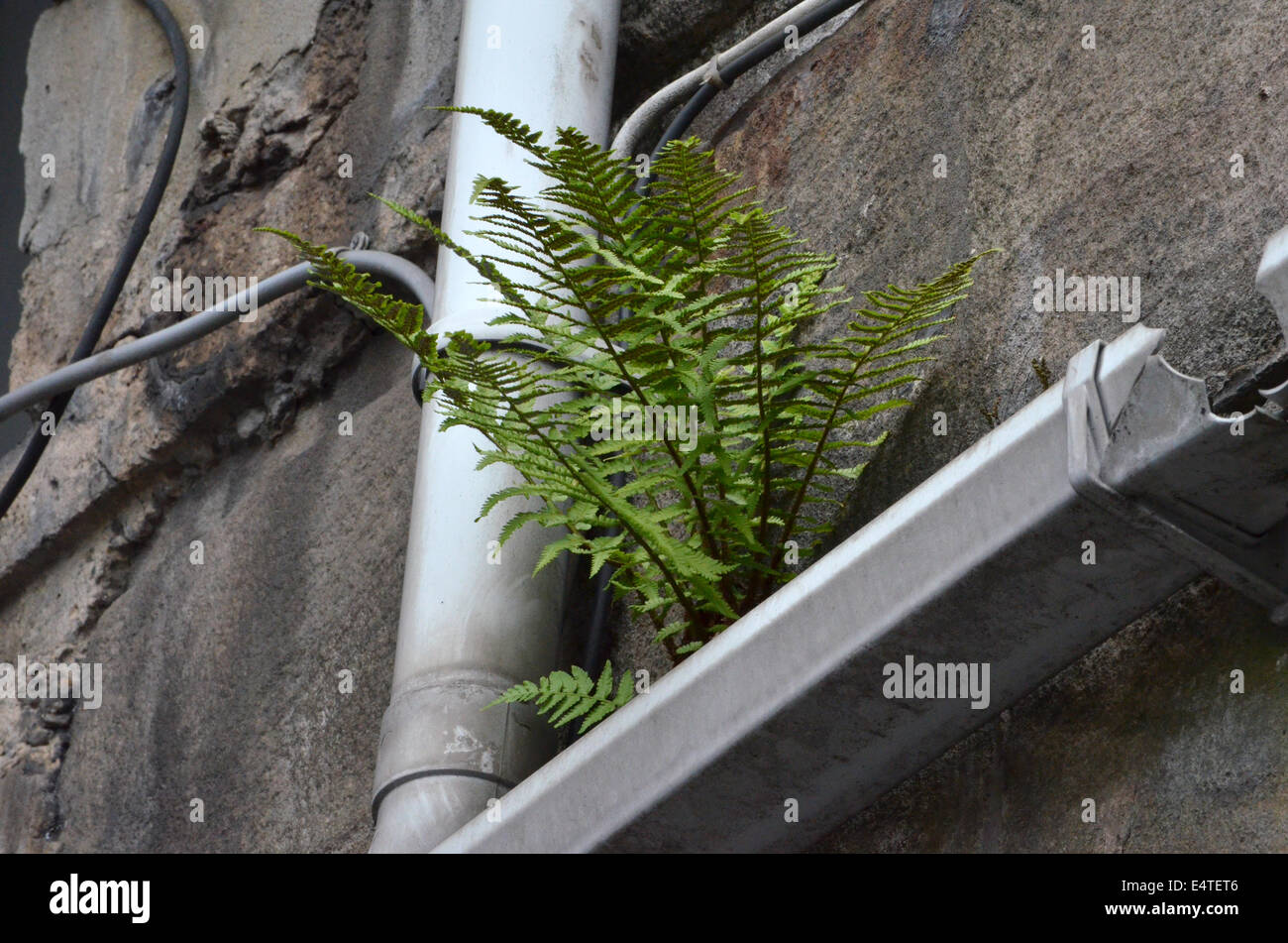 Broken Gutter High Resolution Stock Photography And Images Alamy