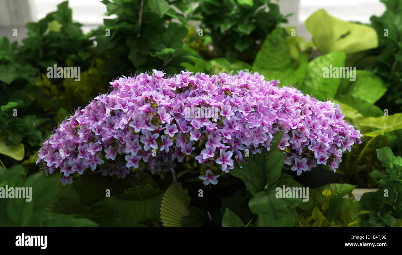 magenta flower and green plants - Stock Image
