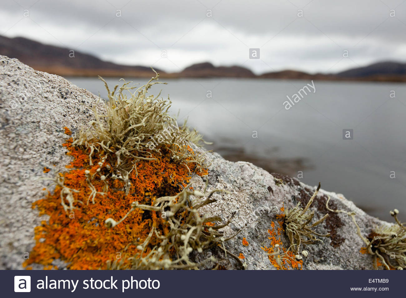 A detail of lichen on a boulder by the side of Loch Aineort near Lochboisdale, South Uist, Outer Hebrides, Scotland. - Stock Image