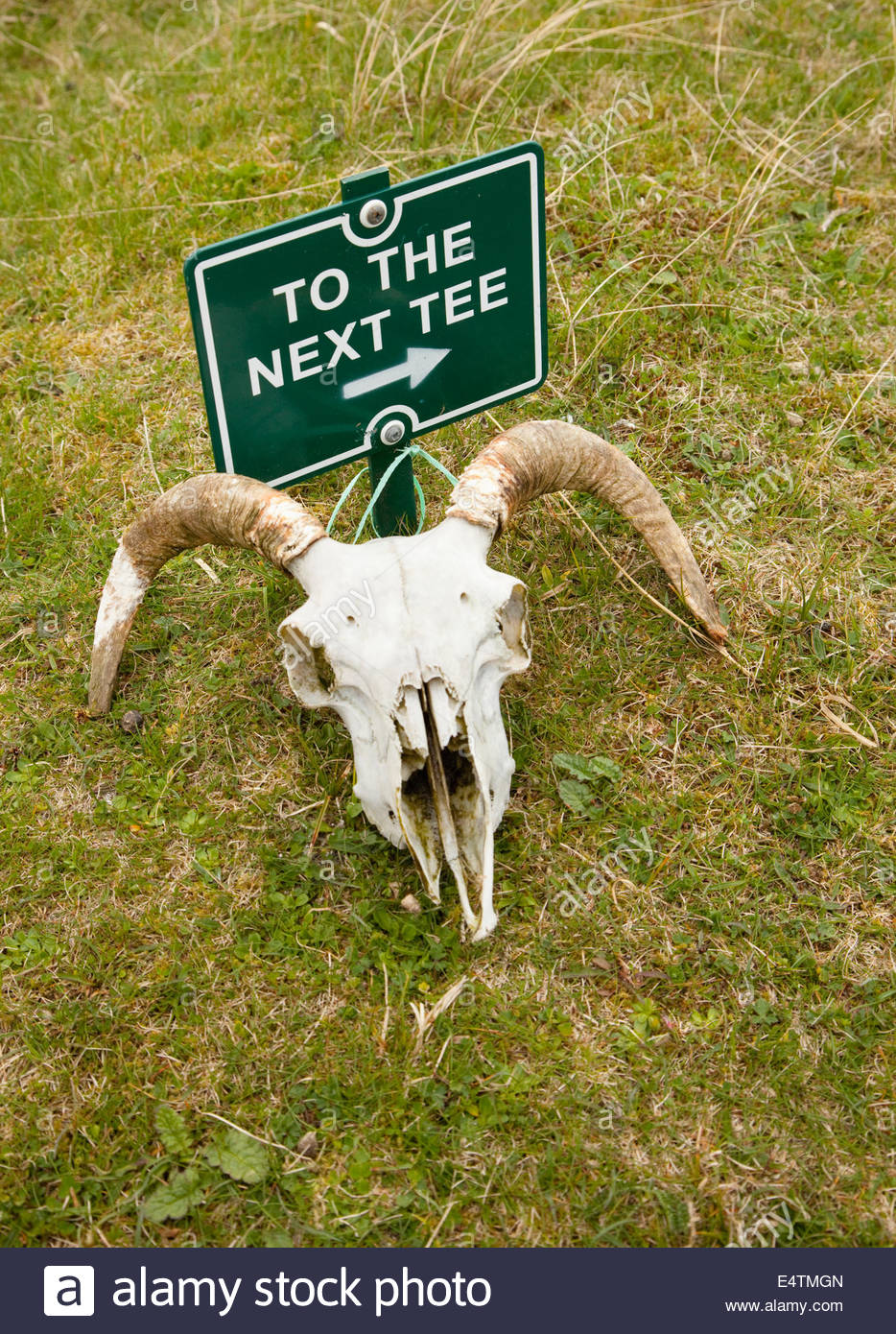 The sign for the next tee (with animal skull), Askernish Golf Club at Askernish, Isle of South Uist, Outer Hebrides, - Stock Image