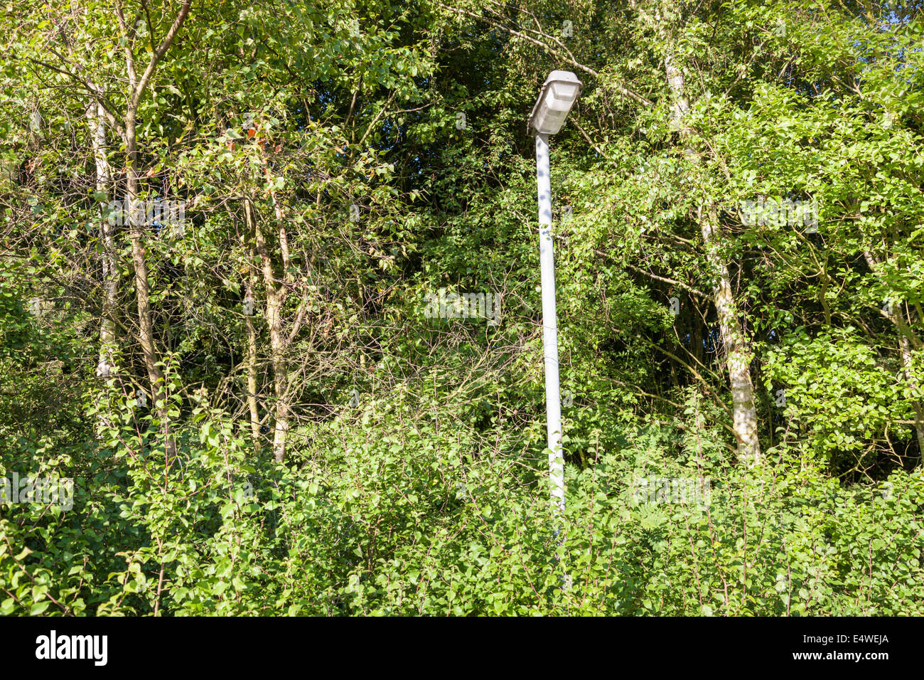 Lamppost and streetlight hidden in trees and becoming overgrown, England, UK - Stock Image