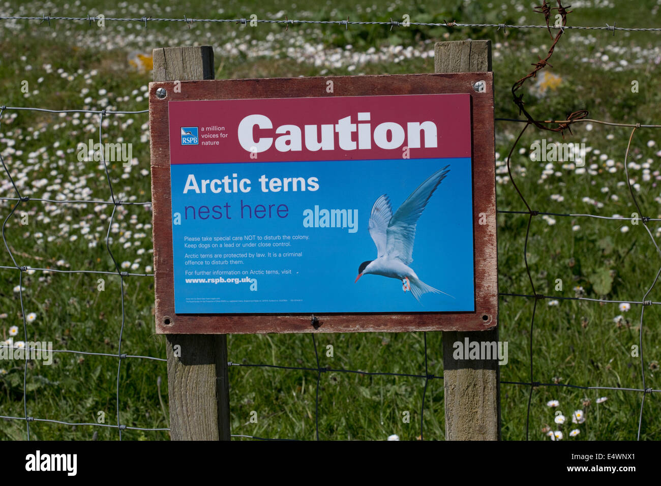 Sign caution Artic terns nest here Balranald Nature Reserve North Uist Outer Hebrides Scotland - Stock Image
