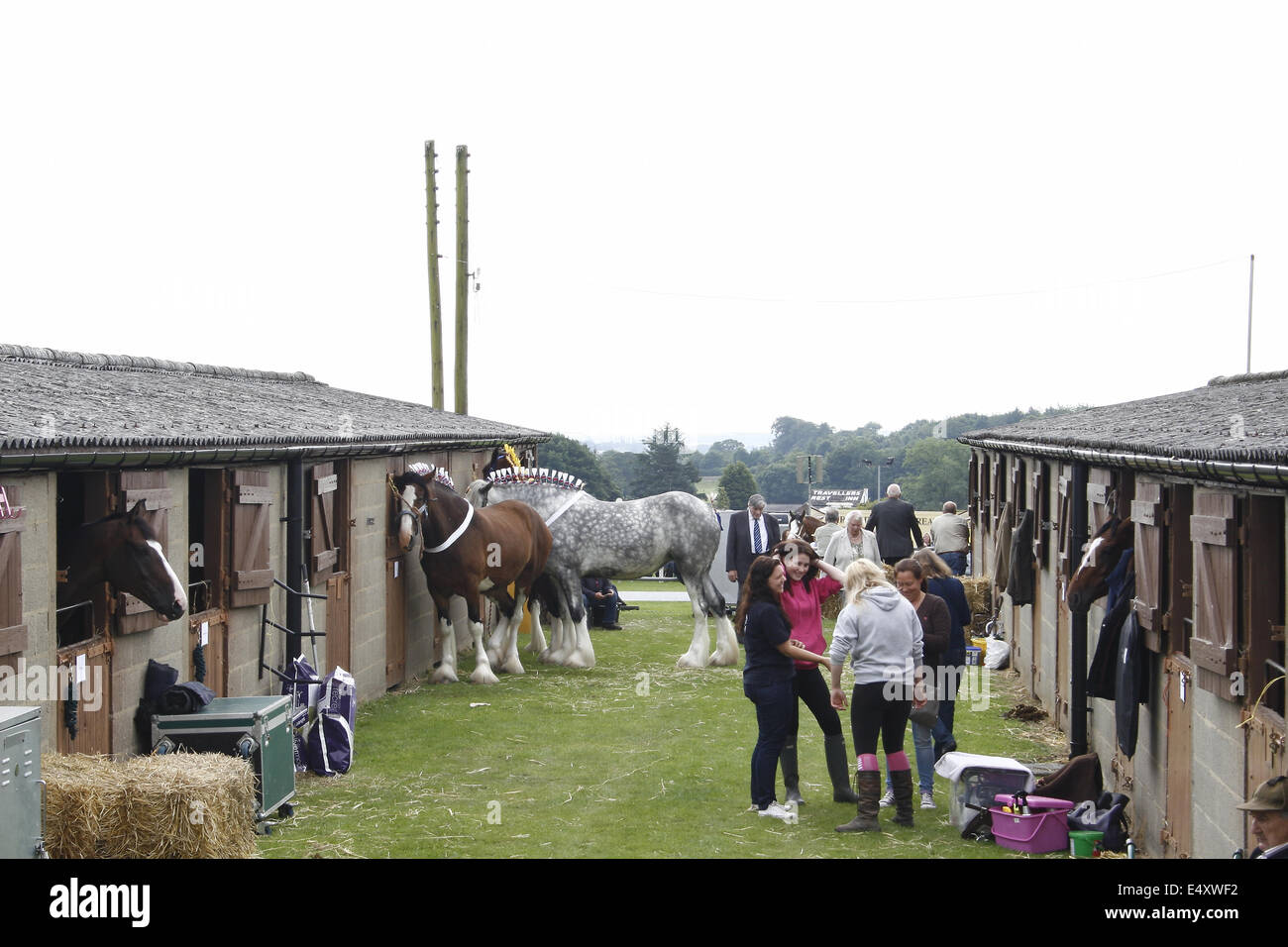 stables at Great Yorkshire Show, Harrogate, Yorkshire, UK - Stock Image