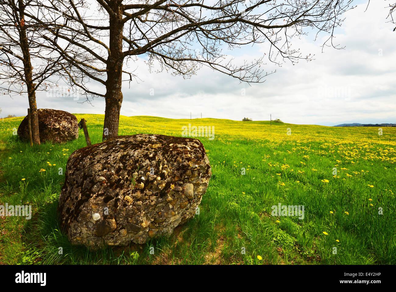 boulder on alp meadow - Stock Image