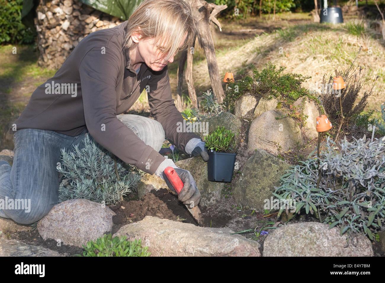 gardening, planting, cultivation, einpflanzen, pflanze, bepflanzung