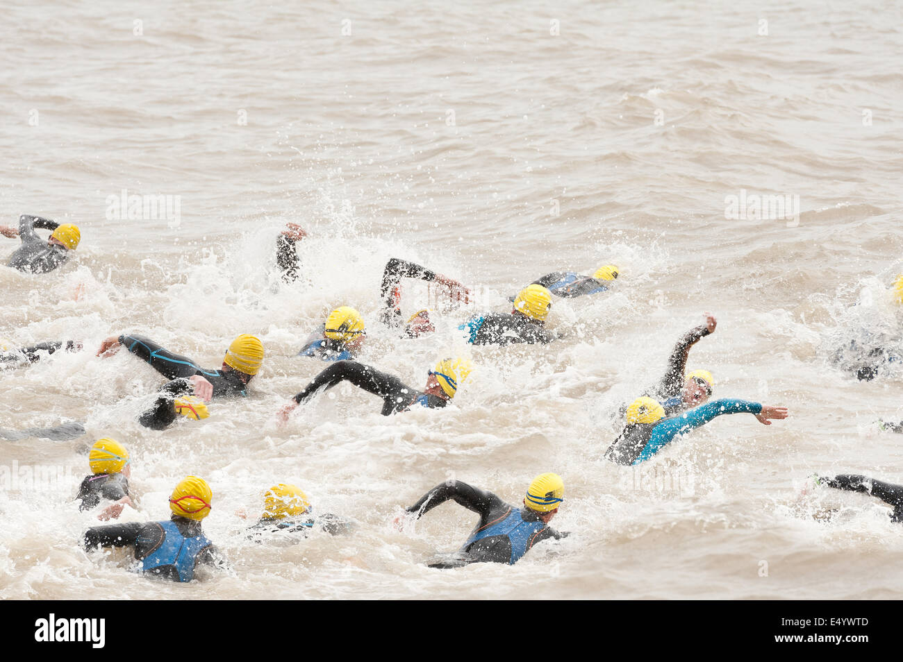 Open water swimming competitors sprinting at start of a triathlon in sea wearing wetsuits crawl deep start freestyle - Stock Image