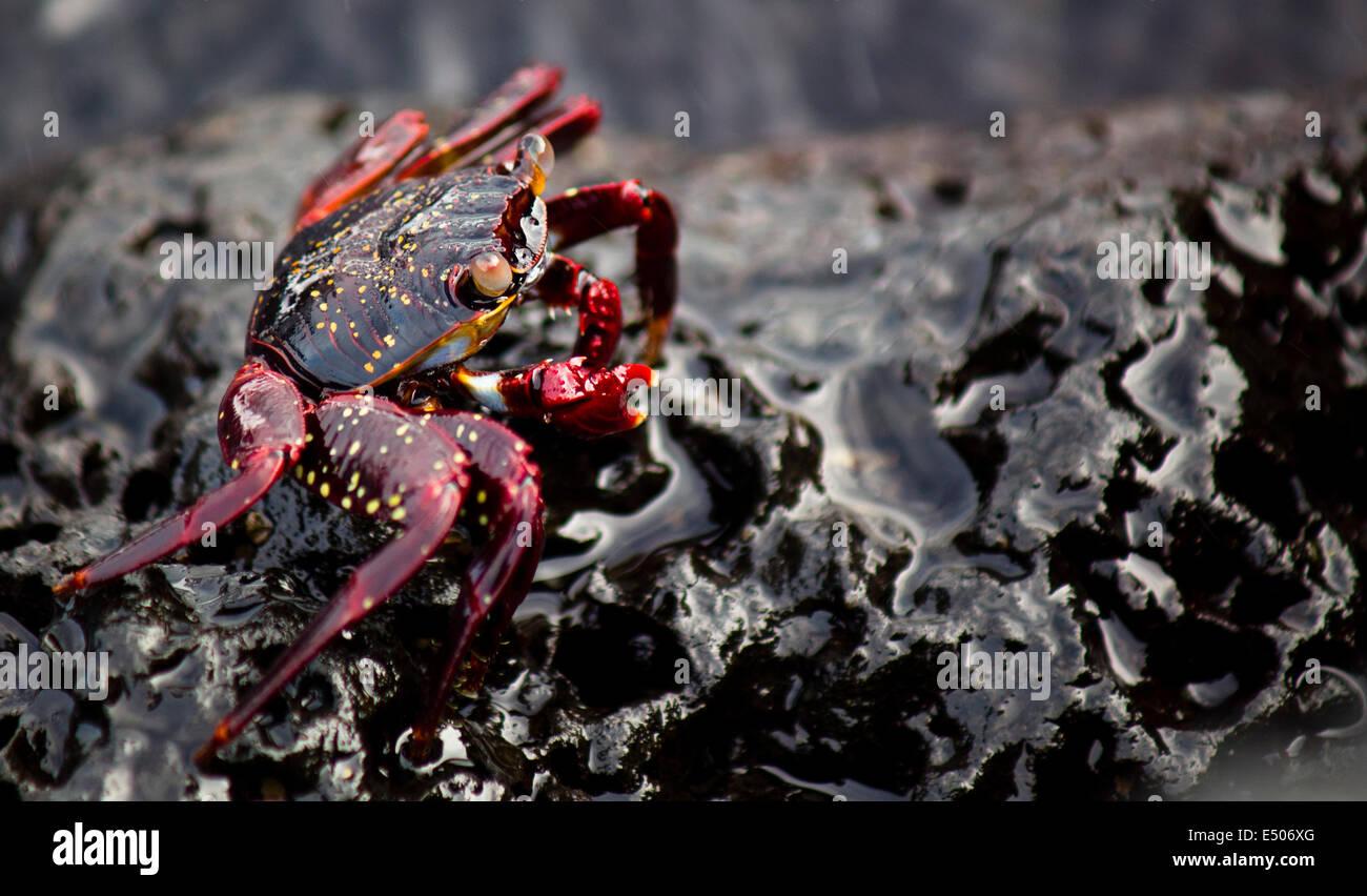Wildlife on Galapagos Island Stock Photo