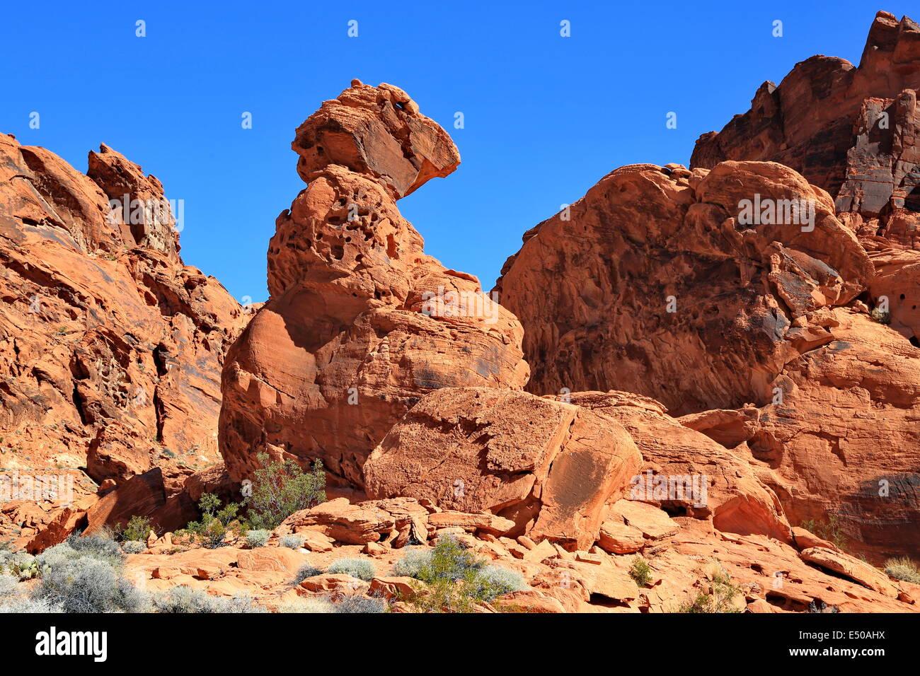 Dino Rock - Stock Image
