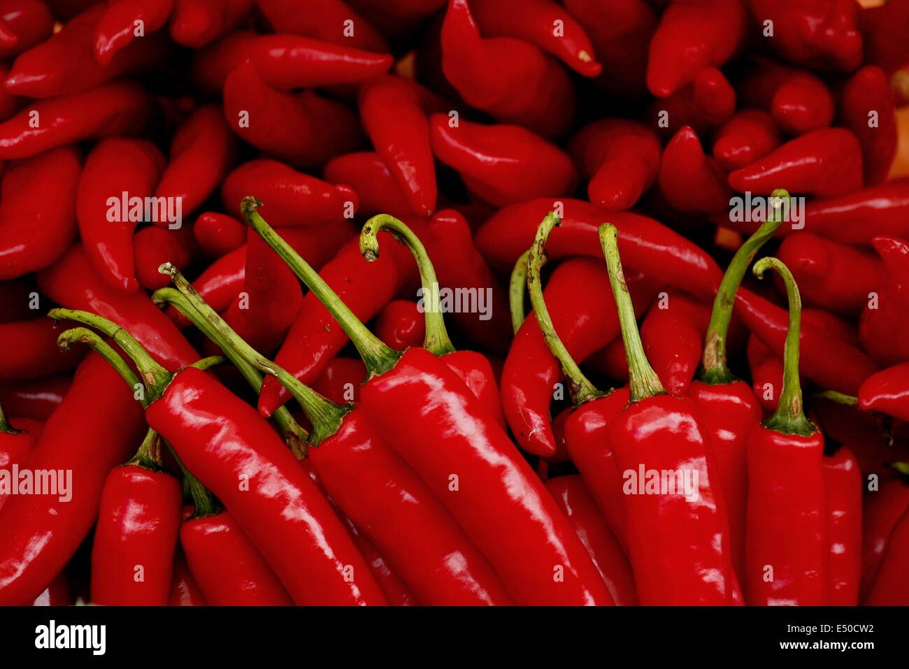 hot red chil - Stock Image