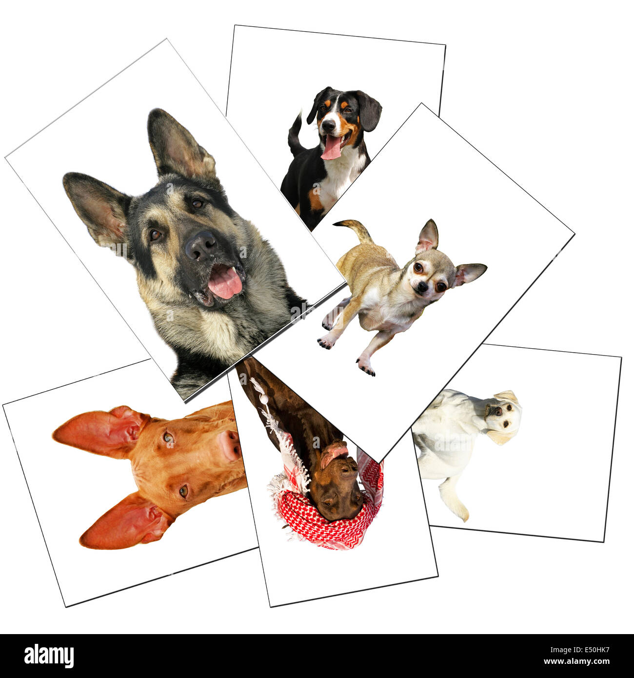 `collection of dogs photos - Stock Image